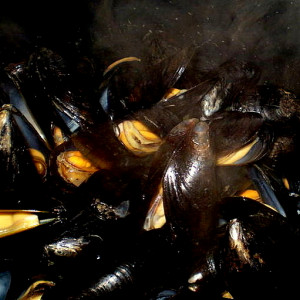 moules_carre